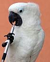 http://www.buecher-wiki.de/uploads/BuecherWiki/th128---ffffff--kakadu_p.kirchhoff_pix.jpg.jpg
