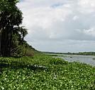 Landschaft am Orinoco - (c) Urlaubsbilder/PIXELIO