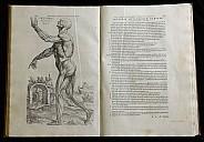 Berühmter Muskelmann - (c) Yale Medical Library